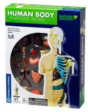 Human Body Anatomy Model Thames & Kosmos