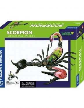 Scorpion Anatomy Kit by Thames & Kosmos