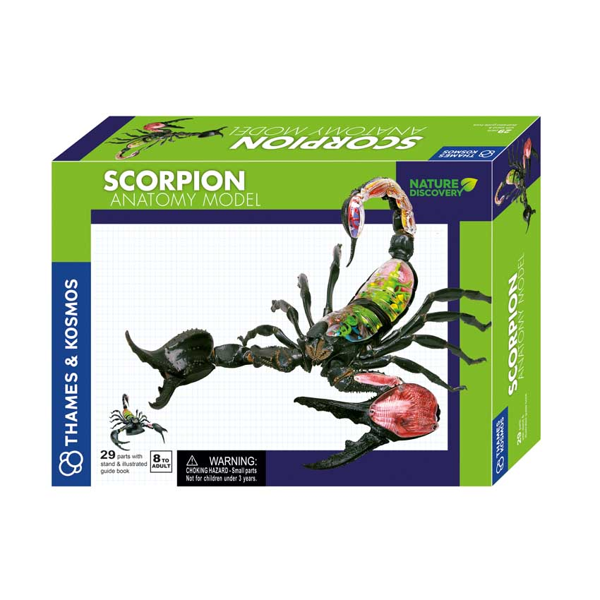 Scorpion Anatomy Model (Age 8+) | Book STEPs